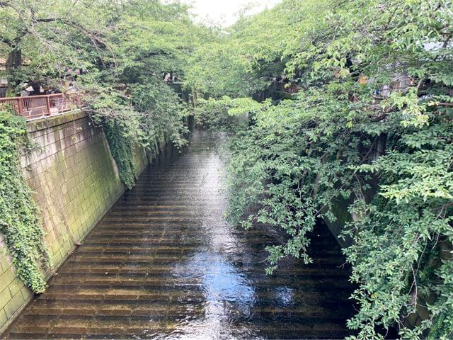 目黒川の新緑